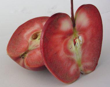"""""""Baya Marisa"""" der Apfel mit dem roten Fruchtfleisch"""